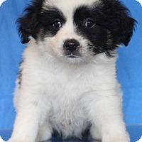 Adopt A Pet :: New York - Waldorf, MD