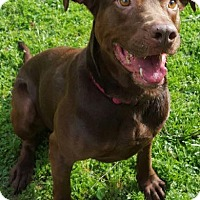 Adopt A Pet :: Maddie - Lafayette, LA