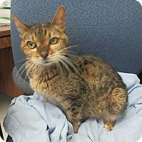 Adopt A Pet :: Bella    SOS - Elizabeth City, NC