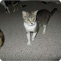 Adopt A Pet :: Shirley - Mobile, AL