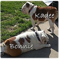 Adopt A Pet :: Bonnie & Kadee - Decatur, IL