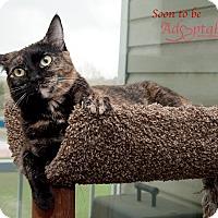 Adopt A Pet :: Venus - Edmonton, AB