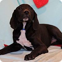 Adopt A Pet :: Yanni - Waldorf, MD
