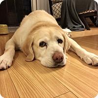 Adopt A Pet :: Bette - Los Angeles, CA
