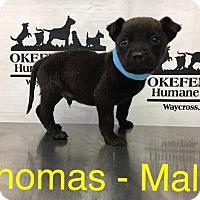 Adopt A Pet :: Thomas - Waycross, GA