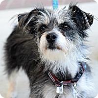 Adopt A Pet :: Little Mama - Memphis, TN