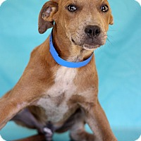 Adopt A Pet :: Neon - Waldorf, MD