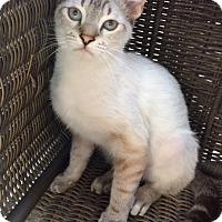 Adopt A Pet :: John Lee - Houston, TX