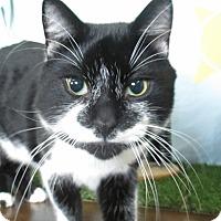 Adopt A Pet :: Saul - Lloydminster, AB