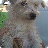Adopt A Pet :: Frankie - Las Vegas, NV