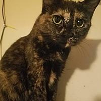 Adopt A Pet :: Greta - Walla Walla, WA