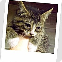 Adopt A Pet :: Faith - Owosso, MI