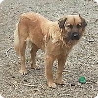 Adopt A Pet :: Sunny - Bardonia, NY