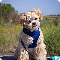 Adopt A Pet :: Leroy - Orange, CA
