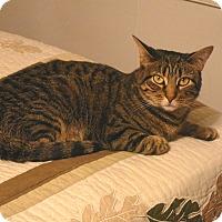 Adopt A Pet :: Susie - Springfield, PA