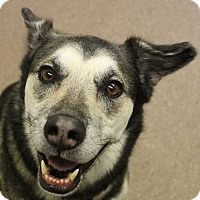 Adopt A Pet :: Clare - North Olmsted, OH