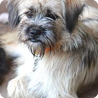 Adopt A Pet :: Ginnie - Norwalk, CT