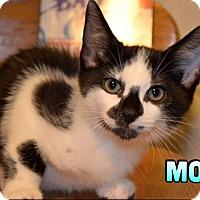 Adopt A Pet :: Moo - Trevose, PA