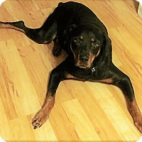Adopt A Pet :: Riggs - Irmo, SC
