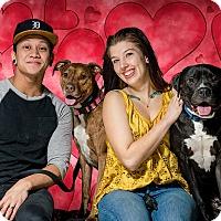 Adopt A Pet :: Sneezy(Buddy)- Adopted 2/18/17 - Livonia, MI