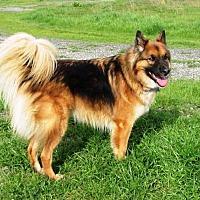 Adopt A Pet :: Koda - Pleasant Grove, CA