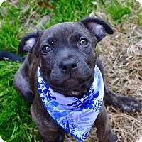 Adopt A Pet :: Mazie - Aubrey, TX
