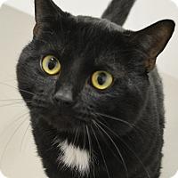 Adopt A Pet :: Hatchet - Springfield, IL