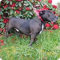 Adopt A Pet :: SPARKY - McKinleyville, CA
