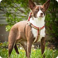 Adopt A Pet :: Sara - Ashville, OH