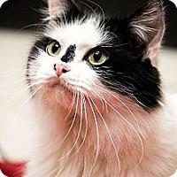 Adopt A Pet :: Bart - Chicago, IL