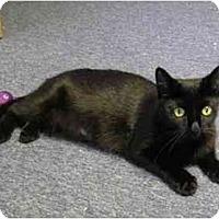Adopt A Pet :: Gia - Boston, MA