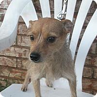 Adopt A Pet :: Charolotte