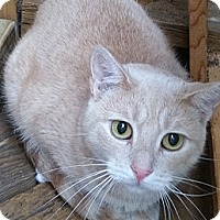 Adopt A Pet :: Blondie - East Meadow, NY