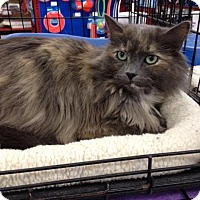 Adopt A Pet :: Dixie - Sterling Heights, MI