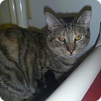 Adopt A Pet :: Shelly - Hamburg, NY
