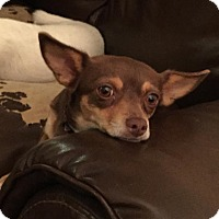 Chihuahua Mix Dog for adoption in Valley Center, California - Ruby
