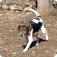 Adopt A Pet :: Luigi - House Springs, MO