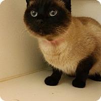 Adopt A Pet :: Dinah - Chula Vista, CA