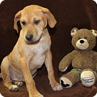 Adopt A Pet :: Gilligan - Salem, NH