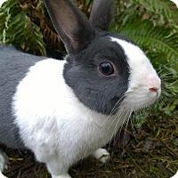 Adopt A Pet :: Tardis - Seattle c/o Kingston 98346/ Washington State, WA