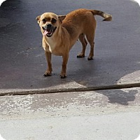 Adopt A Pet :: Mary - Weatherford, TX