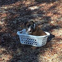 Adopt A Pet :: Otis - Cibolo, TX