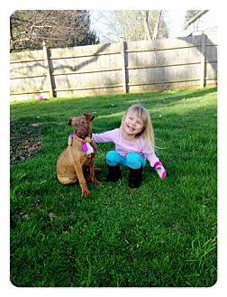 Terrier (Unknown Type, Medium) Mix Puppy for adoption in Southampton, Pennsylvania - Strawberry