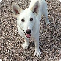 Adopt A Pet :: Sandler - Cedar City, UT