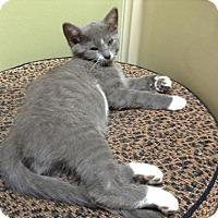 Adopt A Pet :: Fred H - Huntsville, AL
