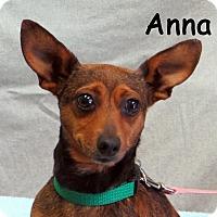 Adopt A Pet :: Anna - Warren, PA