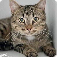 Adopt A Pet :: Billy - Merrifield, VA