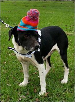 Labrador Retriever Mix Dog for adoption in Simsbury, Connecticut - Wilmington & Larson-Mom & Son