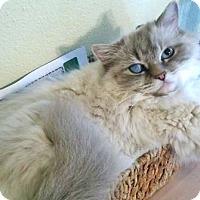 Adopt A Pet :: Rica - Davis, CA