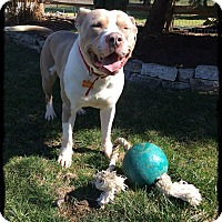 Adopt A Pet :: Humphrey - Toledo, OH
